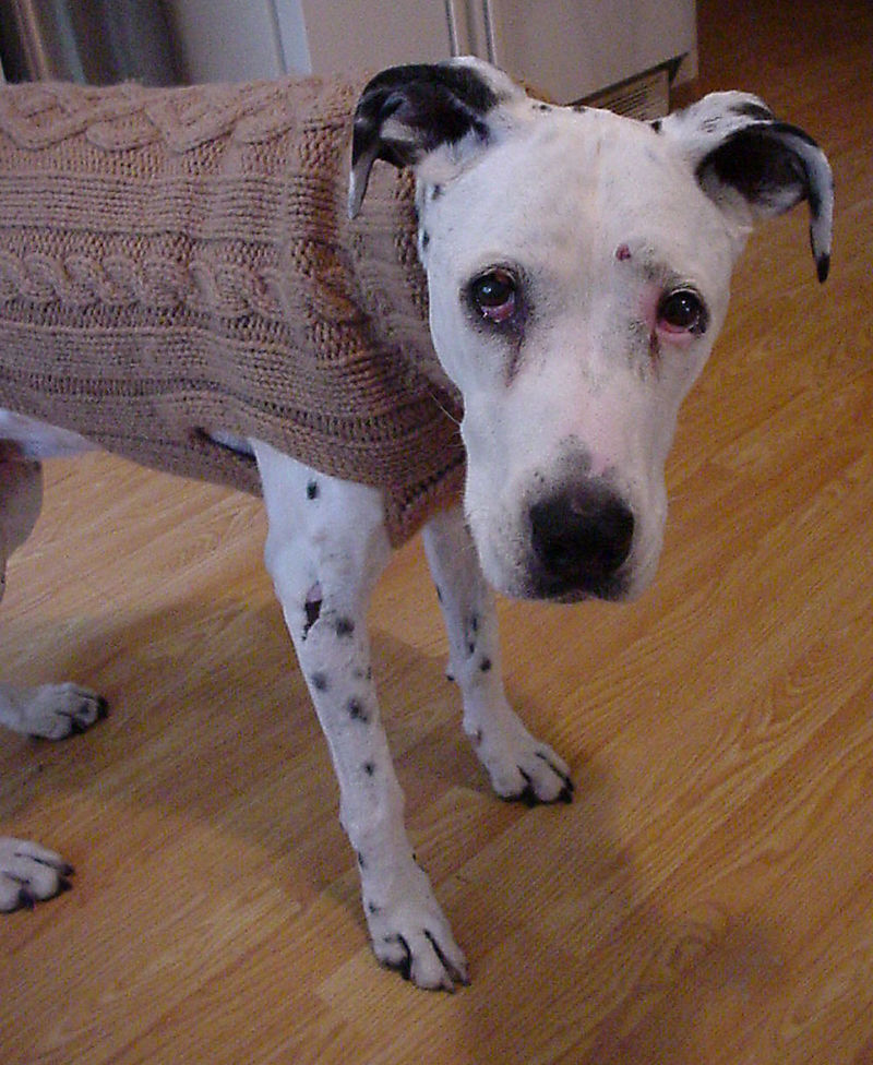 Hazesweater2008